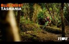Flow Nation: Derby, Tasmania - the latest trails